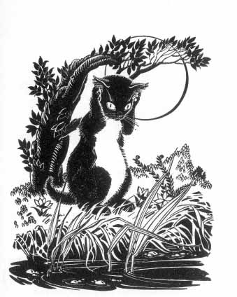 A cat sits on its hind legs on the banks of a river holding his front paws over his ears.