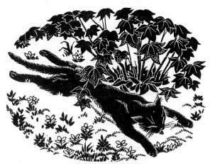 The cat lies stretched out on his stomach underneath a bush.